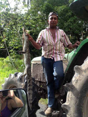 The caiman and his captor on the tractor