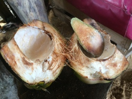 So we were told that our found coconuts were too small and old. But then Harolf, one of the hotel owners, gave us pipas (green coconuts hacked so a small hole is produced for a straw.) So refreshing! Then the workers split the coconuts, sliced off a piece for a scoop and we got to eat the flesh. Sooooo yummy!