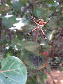 Even though spiders really creep me out, they can be amazingly beautiful...from a distance.