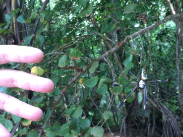 And this is one huge spider. BTW both hands in the shots are Guy's not mine.