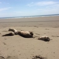 Walking the beach you might see driftwood that looks (to me anyway) like a swimming man...