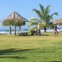 Gama and a second worker re-thatching a palapa roof...